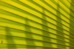 Green Palm leaves textures Royalty Free Stock Images