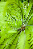 Green palm leaves from top, shallow Stock Images