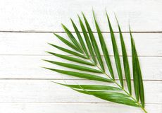 Green palm leaves on white wooden background top view / Betel palm leaf stock photography