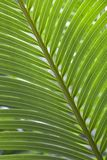 Green Palm Pattern. Horizontal image of green palm leaves Royalty Free Stock Images