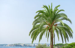 Green palm. Stock Image
