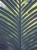 Green Palm Plant Stock Images