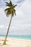 Green Palm on a sand beach under cloud sky Royalty Free Stock Photos