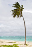 Green Palm on a sand beach under cloud sky Stock Photo