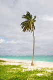 Green Palm on a sand beach under cloud sky Royalty Free Stock Images