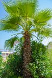 Green palm by the sea on a sunny day stock image