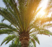 Green palm. Stock Photos