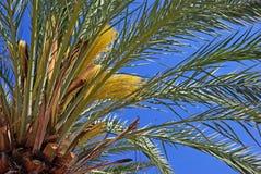 Green palm tree. Royalty Free Stock Photo