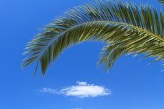 Green palm tree Royalty Free Stock Image