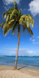 Green palm tree. Palm tree on a tropical beach Royalty Free Stock Images