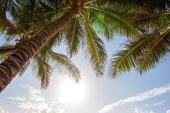 Green palm tree against blue sky and white clouds Royalty Free Stock Image