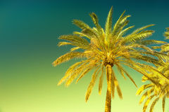 Green palm tree against sunny blue sky. Summer holidays Stock Photo