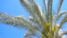 Green Palm tree amid the boundless blue sky with sunshine stock video footage