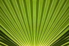 Green palm tree Stock Image