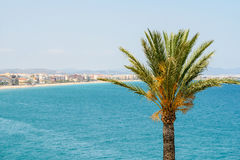 Green Palm Tree With Blue Sea And City Skyline Stock Image