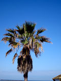 Green palm tree on blue sky background. Shining sun on nice beach with palm trees Stock Photo