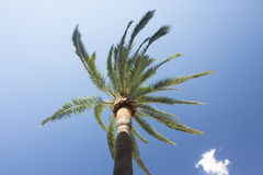 Green palm tree on blue sky background. Stock Photos