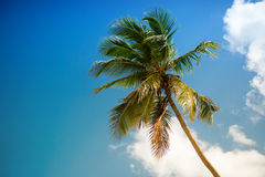 Green palm tree on blue sky background.  Stock Image