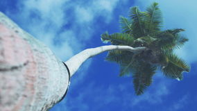 Green palm tree on blue sky background. Coconut palm tree on a blue sunny sky  perspective view from floor high up stock video footage