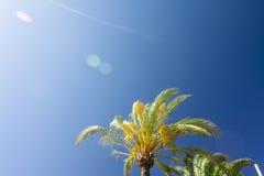 Green palm tree on blue sky background. Stock Photo