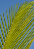 Green Palm Tree Branch during Daytime Royalty Free Stock Images
