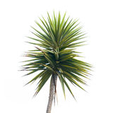 Green palm tree branch Royalty Free Stock Photography