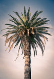Green palm tree in Croatia Royalty Free Stock Image