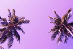 Green palm tree crowns on violet sky background. Coco palm pink toned photo. Summer vacation travel banner template. Exotic palm leaf ornament. Tropical island stock photo
