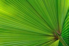 Green palm tree leaf Stock Image