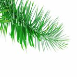 Green palm tree leaf Royalty Free Stock Photography