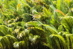 A green palm tree Stock Images