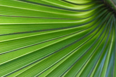 Green Palm Tree Leaf. Art Abstract and Background Stock Photo