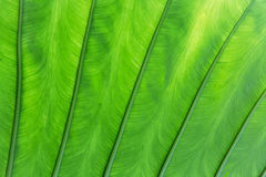 Green palm tree leaf Stock Photography