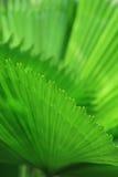 Green palm tree leaf Royalty Free Stock Photos