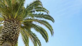 Green palm tree leafs on blue sky. Background. Summer time stock video footage