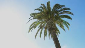 Green palm tree leafs on blue sky. Background. Summer time stock footage