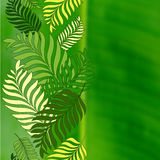 Green palm tree leaves and blurred background with place for tex Stock Photo