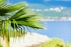 Green palm tree leaves on seaside blurred background Royalty Free Stock Images