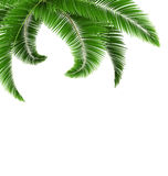 Green palm tree leaves  on white Stock Images