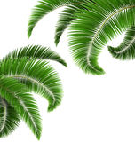 Green palm tree leaves  on white Royalty Free Stock Photography