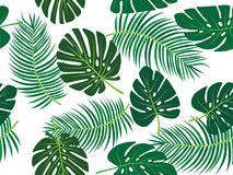 Green palm tree and monstera leaf vector tropical theme seamless pattern Stock Photos