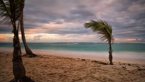 Green Palm Tree Near Body of Water Stock Photos