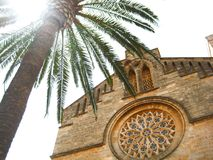 Green palm tree near the stone house of spain Palma de Mallorca. Trees and old buildings in Palma Royalty Free Stock Image