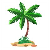 Green palm tree on a neutral background. Green palm tree on a sandy soil and a neutral background vector illustration