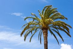 Green palm tree over blue sky Royalty Free Stock Photography