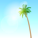 Green palm tree over blue sky vector Royalty Free Stock Images