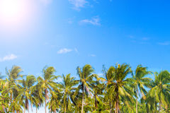 Green palm tree skyline on tropical island. Blue and sunny sky. Summer vacation banner template. Fluffy palm tree with green leaves. Coconut palm under Stock Photography