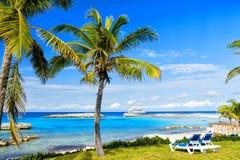 Green palm tree on sunny beach Stock Photo