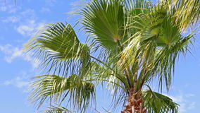 Green palm tree. Palm trees with green leaves and beautiful blue sky in background. Footage is taken during trip in Side, Turkey in hot summer day stock video footage