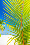 Green palm tree on tropical beach in Maldives. Indian Ocean Stock Photography